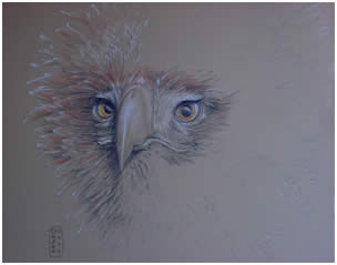 Australian Wedge Tailed Eagle Note Card