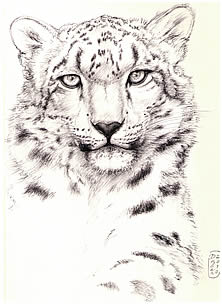 Snow Leopard note card
