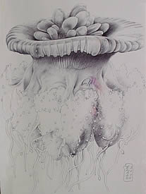Jellyfish Drawing - Pen and Ink - Matted and Framed $350.00