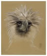 Philippine Eagle - Purchase Drawings